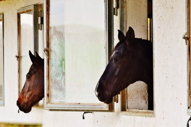 horse-1006577_1280