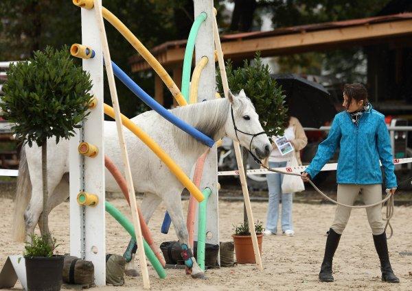 horseathlon